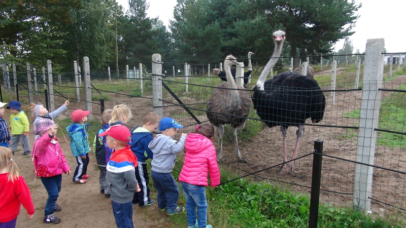 strusia-farma-przedszkole-gdansk